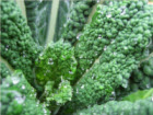 kale feature